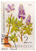 Post stamp printed in USSR (CCCP, soviet union) shows plant of D — Stock Photo