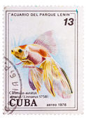 Postage stamp printed in the Cuba shows carassius auratus auratu — Stock Photo