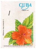 Samp printed in Cuba shows the flower Hibiscus rosa-sinensis — Stock Photo