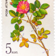 Stamp from the USSR (Scott 2008 catalog no. 5381) shows a prickl — Stock Photo #41871953