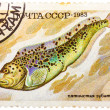Stock Photo: Stamp printed by Russi(USSR), shows fish, Anarhichas minor