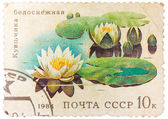 Stamp from the USSR shows image of water lilies — Stock Photo
