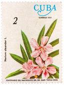 由古巴印制的邮票展示夹竹桃花 — 图库照片