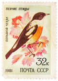 Stamp printed by Russia, shows bird, White-throated Bush Chat — Stockfoto