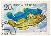 Stamp printed by Russia, shows fish, Neogobius fluviailis — 图库照片