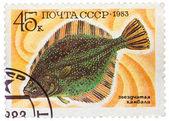 ロシア、によって印刷スタンプ ショー水中魚ヒラメ — ストック写真