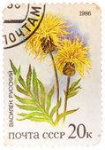 由俄罗斯,印制邮票显示野生花卉俄罗斯矢车菊 — 图库照片