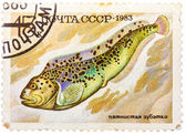 Stamp printed by Russia (USSR), shows fish, Anarhichas minor — Foto Stock