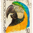 Stock Photo: Stamp printed by Russishowing parrot, 120-th anniversary of th