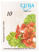 Stamp printed in Cuba, flower shows Pelargonium zonale — Stock Photo
