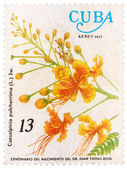 Stamp printed in Cuba shows image of a Caesalpinia pulcherrima — Stock Photo