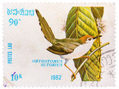 Stamp printed in LAOS shows Common Tailorbird (Orthotomus sutori — Stockfoto