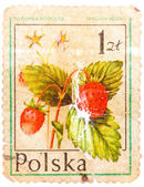 Stamp printed in POLAND shows Fragaria vesca — Stock Photo