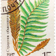Stamp printed in the USSR shows Ostrich fern — Stock Photo #42037935
