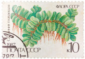 Stamp printed in the USSR shows Floating Salbiniya — Stockfoto