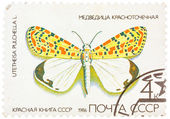 Stamp printed in USSR, shows Butterfly Utetheisa pretty Utetheis — Stock Photo