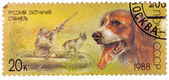 Stamp printed in USSR, shows Russian spaniel, duck hunt, series  — Stock Photo