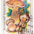 Stamp printed in USSR, Tylopilus felleus, formerly Boletus felle — Stock Photo #42040021