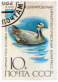 Stamp printed in USSR (Russia) shows a bird Eulabeia indica  — Stock Photo
