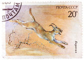 Stamp printed in USSR (Russia) shows a image of a Endangered ani — Stock Photo