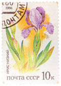 "Stamp printed in USSR from the ""Plants of Russian Steppes "" issu — Stock Photo"