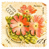 Stamp printed in USSR shows a Primula minima — Stock Photo