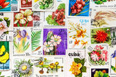 Stamp printed in USSR shows flower — Stock Photo
