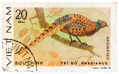 Stamp printed in Vietnam shows Phasianus colchicus or common phe — Stock Photo