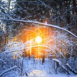 Stock Photo: Winter landscape with the pine forest and sunset