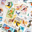"Stamps printed in the USSR, united by one theme - ""Wild Birds"", arranged background — Stock Photo #44657037"
