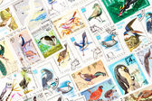"Stamps printed in the USSR, united by one theme - ""Wild Birds"", arranged background — Stock Photo"