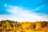 Summer landscape with colorful forest  — Stockfoto