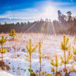 First Snow Covered The Dry Yellow Grass In Forest — Stock Photo #51518589