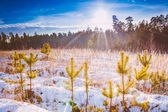 First Snow Covered The Dry Yellow Grass In Forest — Stock Photo