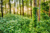 Mixed forest, russian nature — Stock Photo