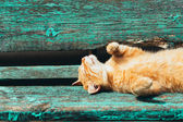 Red kitten cat sleeps on a bench in park — Stock Photo