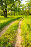Road, path, way, lane in summer green forest — Stock Photo