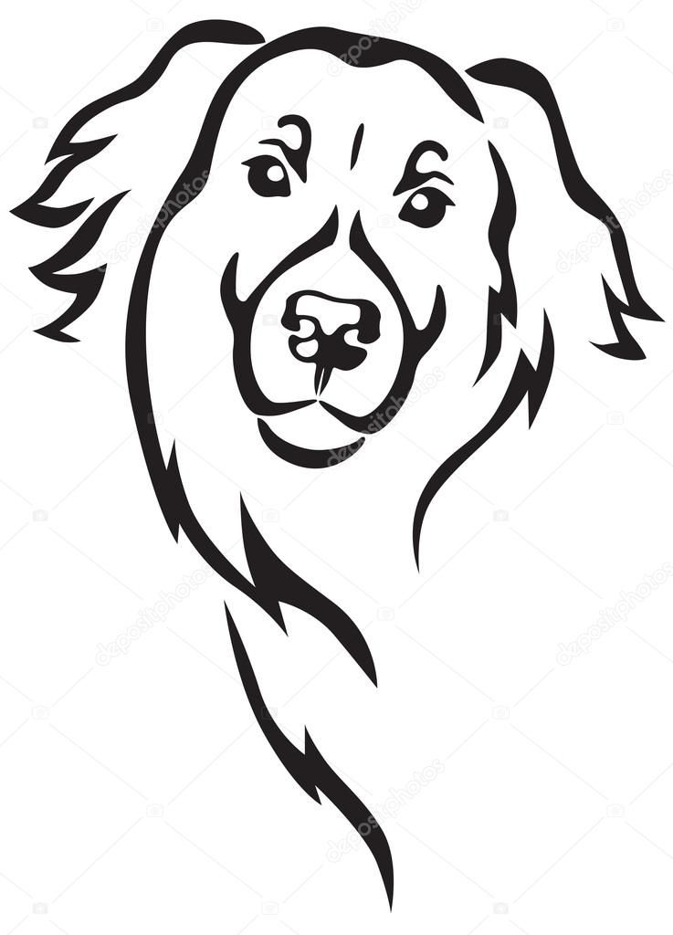 Line Drawing Dog Face : Newfoundland dog head stock vector � agrino