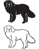 Contour and silhouette of Newfoundland dog — Stock Vector