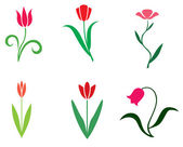 Set tulips — Stock Vector
