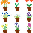 Set bulbs flowers in pots — Stock Vector