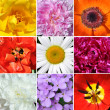 Stock Photo: Corollas flowers