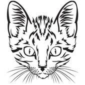 Kitten snuit — Stockvector