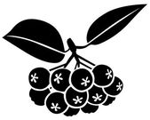 Chokeberries — Stock Vector