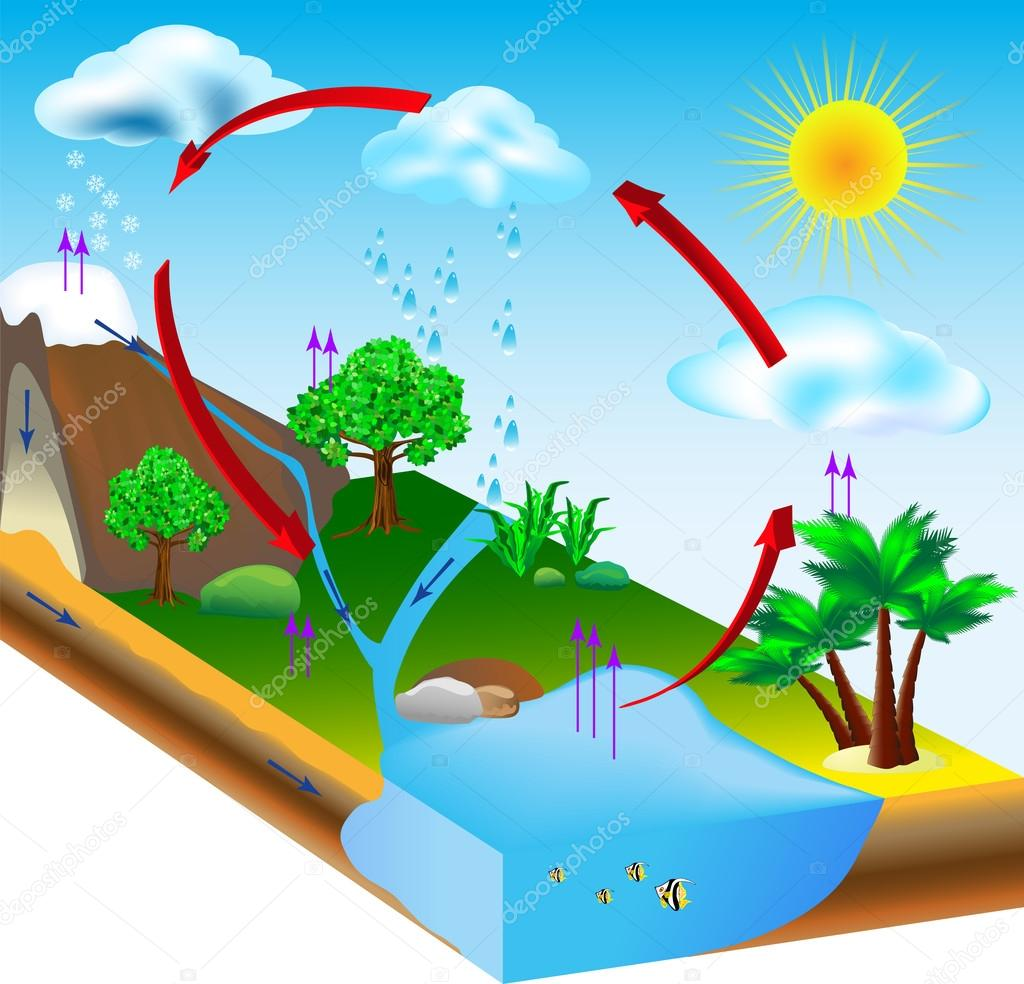 The Water Cycle Condensation Water cycle diagram vector.