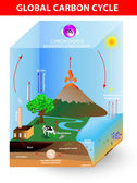 Carbon cycle. Vector diagram — Stock Vector