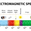 The electromagnetic spectrum vector diagram — Stock Vector #31363833