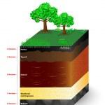 Постер, плакат: Layers of a soil profile