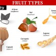 Common Types of Fruits and Seeds. Vector illustration — Imagens vectoriais em stock