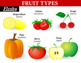 Fleshy fruit types — Stock Vector